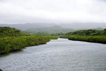 マングローブの前良川