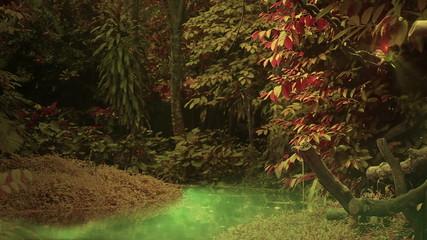 Mystical forest loop, hd