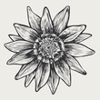 floral design element, engraved retro style
