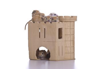 gerbils in wohngemeinschaft, gerbils living in community