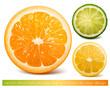 Vector citrus fruits: orange, lime and lemon.