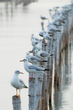 Fototapety Seagull sit on bamboo