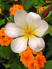 White and orange flower composition