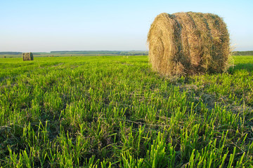 relaxing view of the haystack in the field