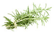tied rosemary twigs