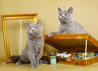 Two British kittens with paints