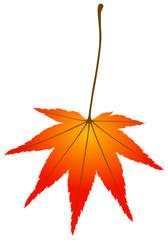 Herbstblatt - Acer palmatum [V] /de
