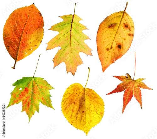 Set: Herbstblätter /de