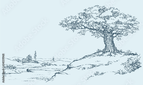 The mighty oak tree grows on top of a hill