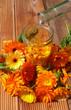 Elixieransatz aus Ringelblumen