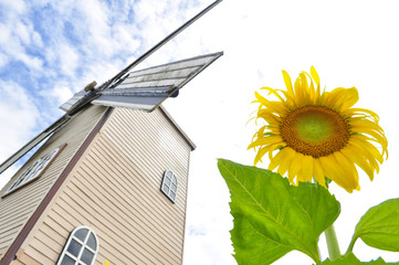 Sunflower with wind turbine