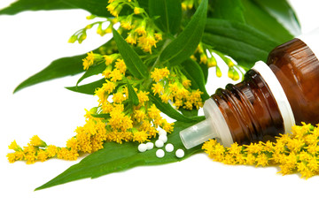 Goldrute, (solidago) als Homeopatisches Medikament