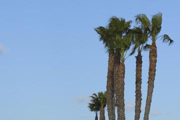 ベンスビーチのパームツリー