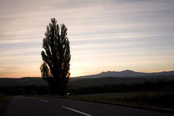 ポプラの木と朝焼け
