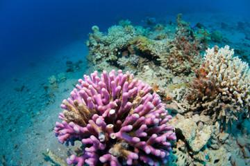 corals in the sea