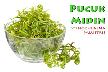Pucuk Midin in a Pretty Glass Bowl