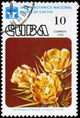 CUBA - CIRCA 1978 Cylindropuntia