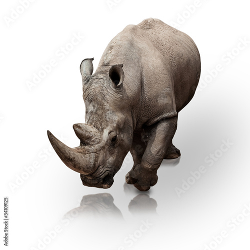 Tuinposter Neushoorn rhinoceros