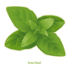 Fresh Sweet Basil