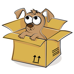 Nice puppy in box