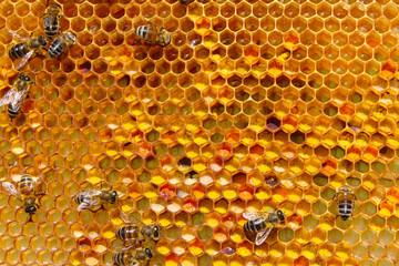 Storage of pollen