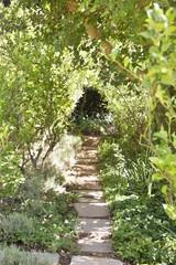 View of walkway between trees