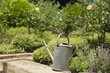 Watering can on a rock in a garden