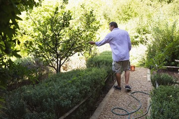 Rear view of a man touching tree in garden