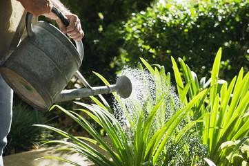 Mature man watering plants in a garden