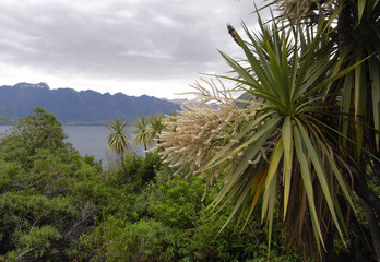 Cabbage tree and typical New Zealand view