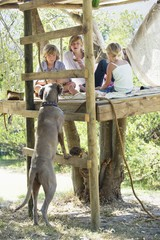 Children playing in tree house and a dog leaning on ladder