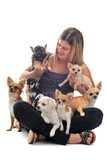 Fototapety girl and chihuahuas