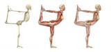 Yoga Dancer Pose - Anatomical Overlays poster