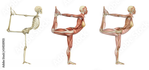 Yoga Dancer Pose - Anatomical Overlays