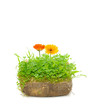 Green Plants and Calendula Flowers in Ground Isolated on White