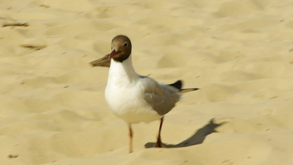 HD - seagull on the beach_scene2