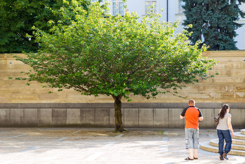 small tree in Prague