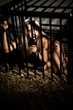 bondage art style with beautiful nude slave girl locked in cage