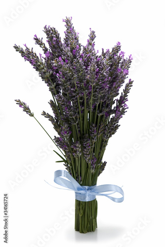 Bunch of lavender standing.