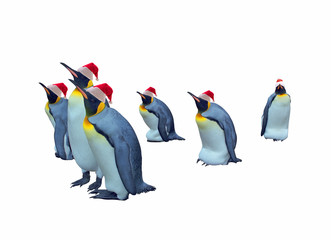 Isolated emperor penguins with clipping path