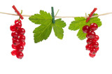 Redcurrant attached with clothespins isolated on white