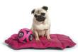 chien sur son tapis avec son jouet