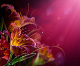 Flowers on a red background .With copy-space