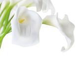 Fototapete Isoliert - Key - Blume