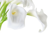 Fototapeta na białym tle - klawisz - Kwiat