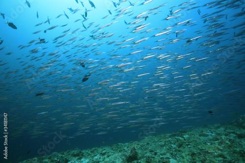 Fototapeten,wasser,unterwasser,unterwasser,tropisch