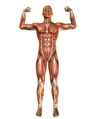 Muskelaufbau Mann in Kraftpose