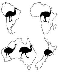 Laufvögel der Welt