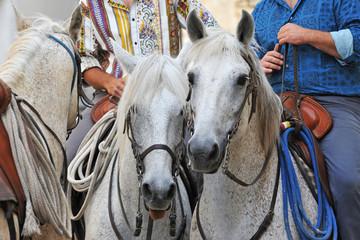 chevaux camargues et gardians