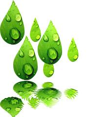 Gotas de hojas verdes reflejadas en el agua